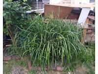 Free garden plant