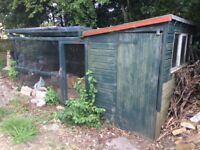 Chicken run with attached shed