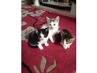 Cute friendly kittens