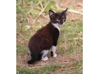 Adorable, playful kittens, lots of fun, ready now! All females.