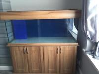5ft fish tank and sump for sale