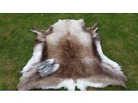 Large reindeer hyde-South Morningside