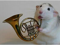 Do you - or did you ever - play trumpet, cornet, French horn or tuba? BCCB wants you :-)