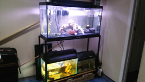 3 tanks setup.  All included