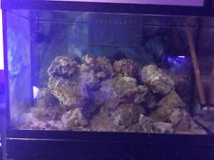 Marine Saltwater aquarium liverock for sale