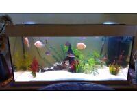 Juwel 3ft 4inch Fish Tank , Aquarium