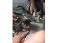 1 kitten left