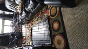Swap large dog cage for large carrier