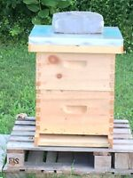 Wanted bee - honey - hive  equipment