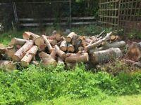 Large Log Pile (Various Types of Wood)