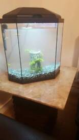 Fish tank with 4 fishes.