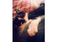 Lovely friendly male kitten for sale
