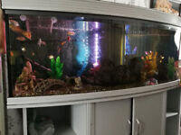 6ft Bow Fish Tank - For Sale