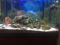 Marine Fish Tank + Marine Animals + Whole Set Up