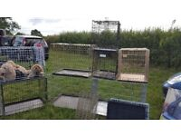 dog crates/cages