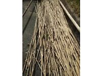 Bundle of about 50 bamboo canes for garden (or less), as stakes for beans etc