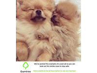 Pomeranian puppies -- Read the ad description before replying to this ad!!
