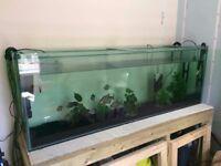 6ft aquarium tank 495l