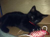 Beautiful little female kitten