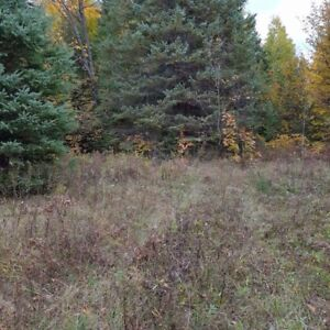 40 Acres  Essonville line Wilberforce Mixed bush  Vacant land
