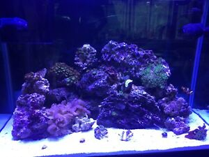 Any other saltwater fish tanks out there?