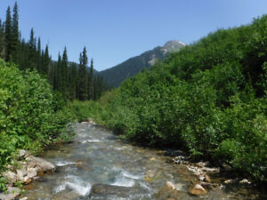 gold claim on graham creek by mica dam and revelstoke