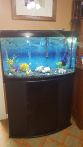 45 Gallon Fluval Bow Front tank with stand, filter and heater
