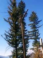 All IN 1 TREE SERVICE 24 hour emergency calls welcome