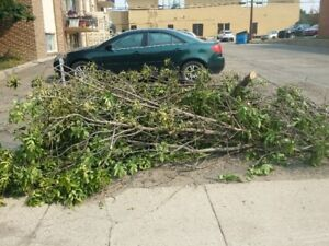 Free tree branches