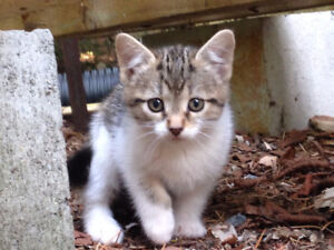 chaton a donner a st donat