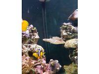 Marine fish and Ro filter