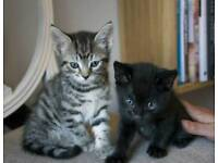Adorable male kittens