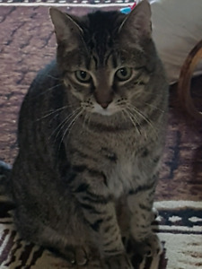 Tabby cat looking for new home