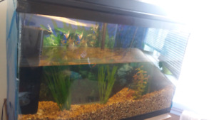 fish tank like new
