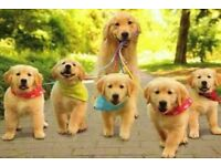 Dog walking and boarding/daycare services.