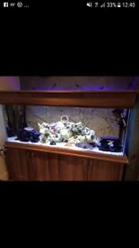 4ft 450litre fish tank for sale