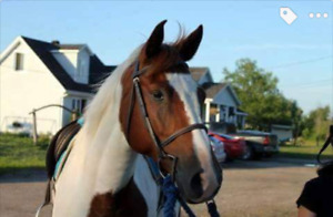 Gelding for sale or lease
