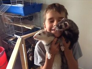Belle petite pension pour animaux/animal daycare  Delson (VIDEO)