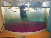 temperate-coldwater fish need new home ASAP