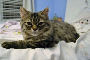 Adorable Persian Kitty Looking For New Home