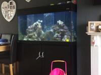 Aqua reef 400 complete marine fish tank setup