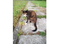 Cat seen