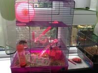 Female hamster with cag