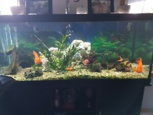 85 gallon tank with multi color led light system with fish
