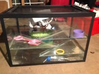 Large glass hamster tank