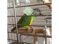 Tv bird parrot amazon talking pet