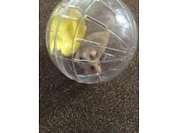 Hamster with cage & extras