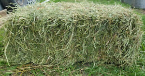 2017 Top Performance Horse Hay Square Bales