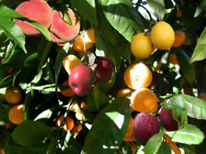 Wanted: Unwanted Fruits, etc.  (Will pick for you too)