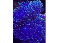 Marine corals Hampshire